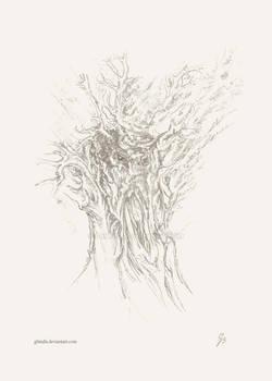 Treebeard drawing