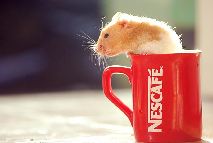 kopi hamster by Blidz-cappuccino