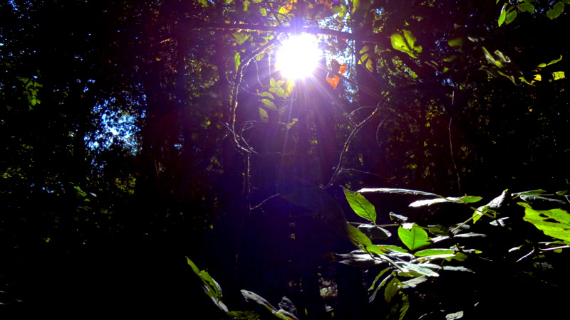 Botanic Dazzle by Hi-Ice-Cas