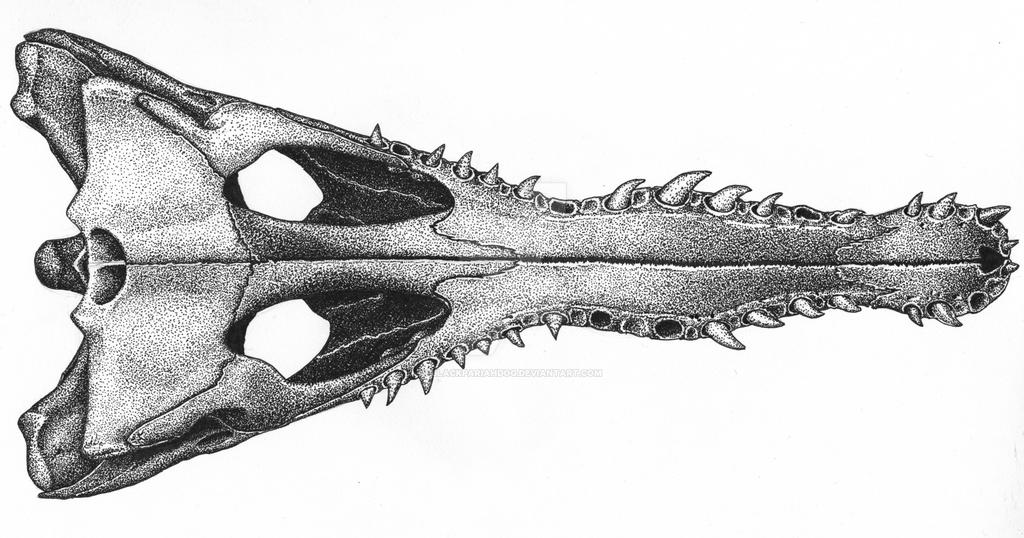Crocodile Skull Ventral By Blackpariahdog On Deviantart