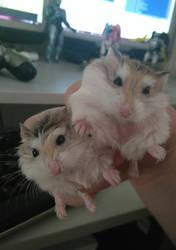 Gizmo and Gilius