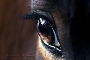 passionforhorse's Profile Picture