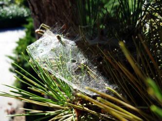 Spiderweb by storybox