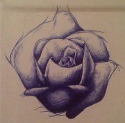 It's a rose I guess