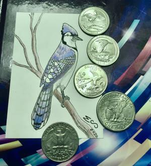 Artist Trading Card: Blue Jay