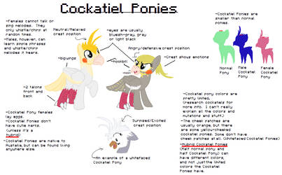 OUTDATED New Pony Species:  Cockatiel Ponies!