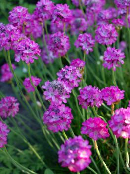 In this garden of mine II