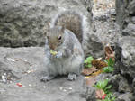 Squirrel and Food
