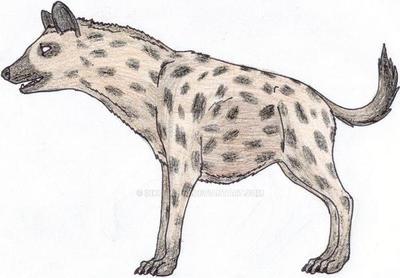 spotted hyena by crazycrocuta