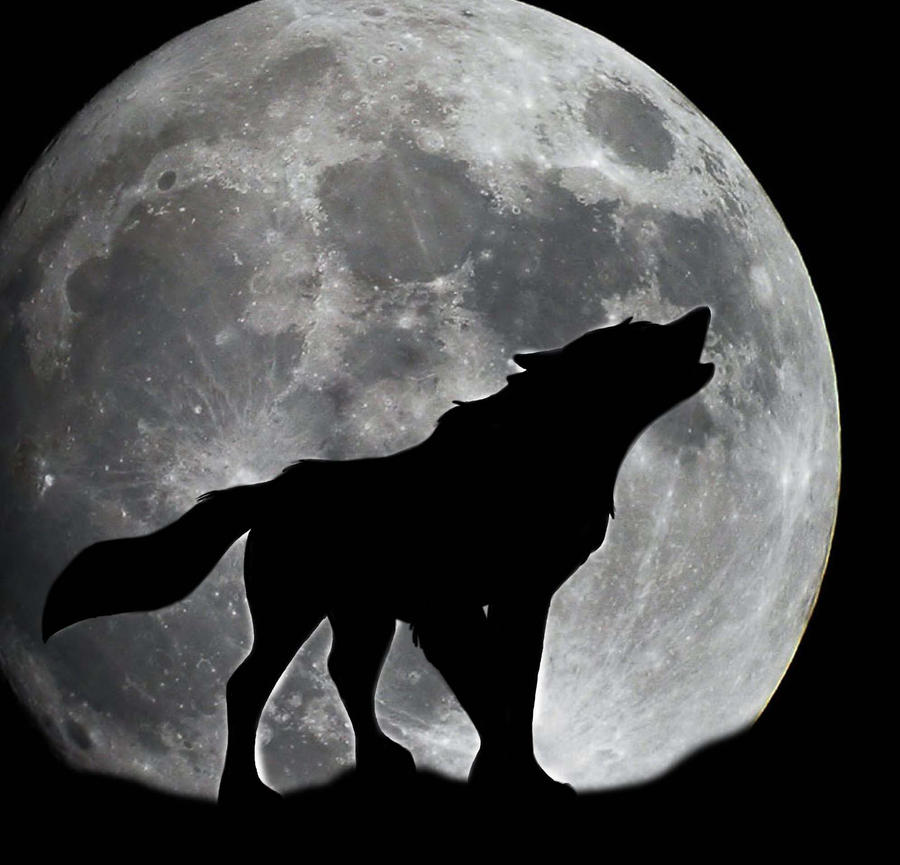 Found It On The Moon Good Dog