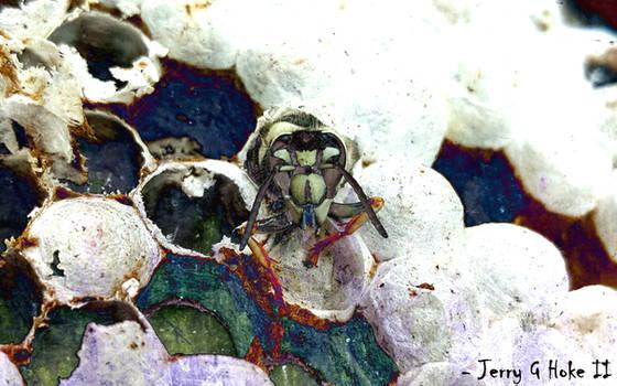 Bald Faced Hornets - The Forsaken Stare of Doom