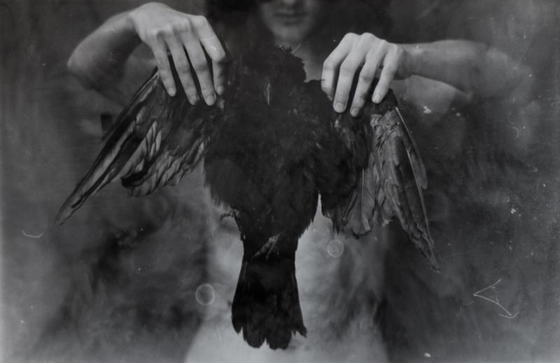 Corvus Corax by Les-Diables
