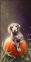 + Pumpkin +