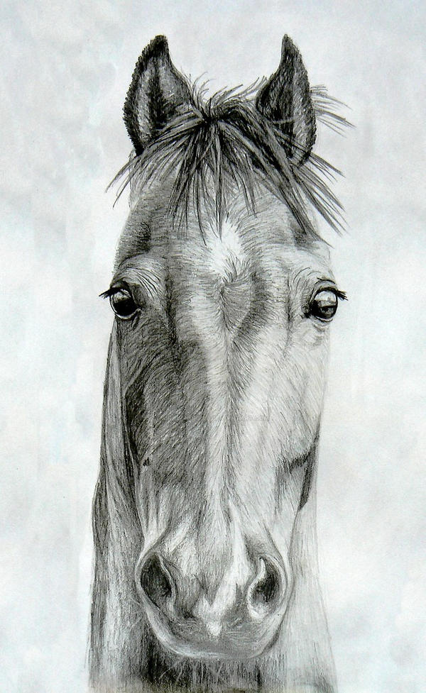 Horse head by Drawing-girl