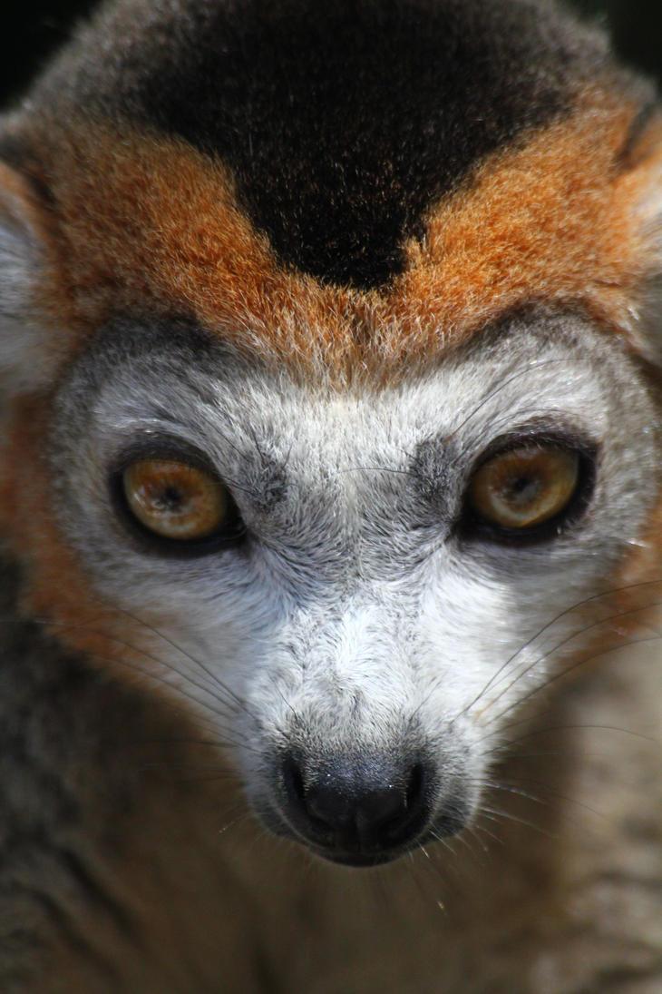 face animal deviantart animals pre