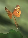 Butterfly 1 by Birdsong231