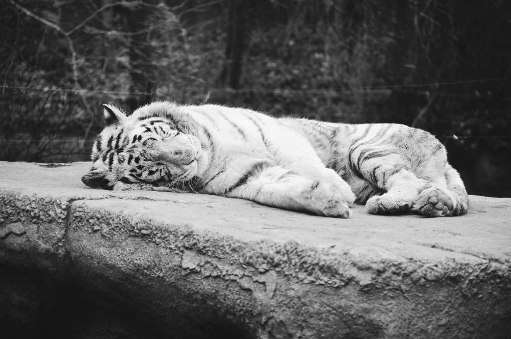 Big Kitty by thatpaperfox