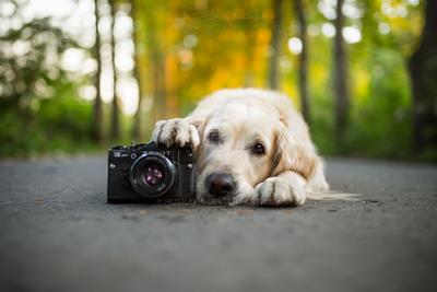 The Camera by Huskana