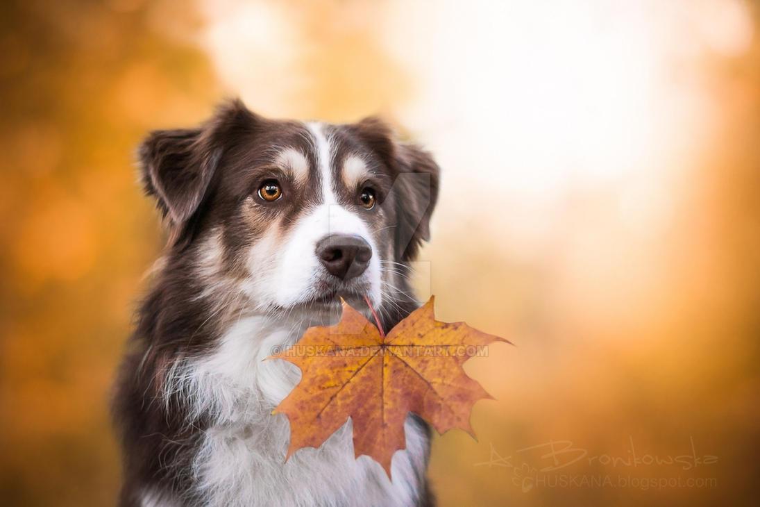 Autumn 2 by Huskana