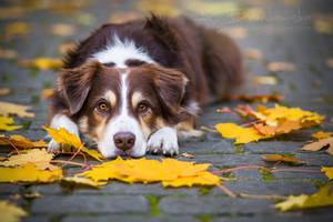 Reset in autumn by Huskana