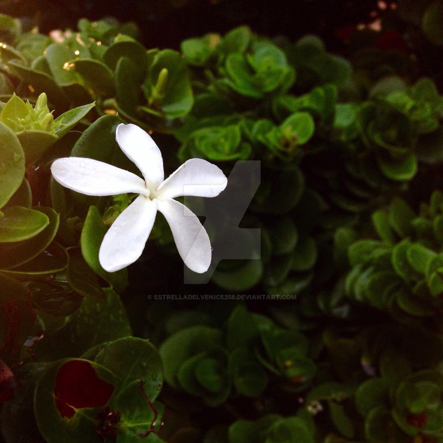Fall Jasmine by EstrellaDelVenice258