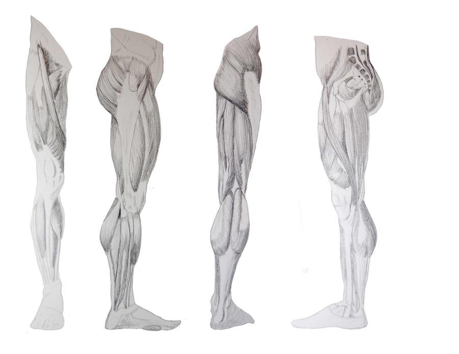 leg muscles drawing - photo #20