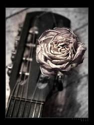 Rose by firework