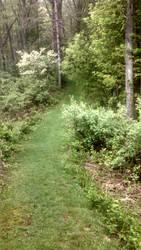 Trail #1 by AlisterThatchel