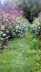 Trail #4 by AlisterThatchel