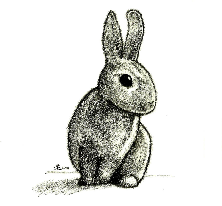 Rabbit Drawing by aquarius-galuxy
