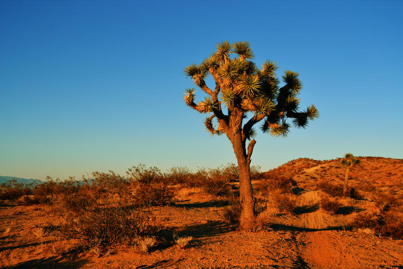 joshua tree national park cougars dating site Ed rosenthal, the culver city real estate broker lost in a remote area of joshua tree national park for six days, said tuesday that he sought shade under a tree.