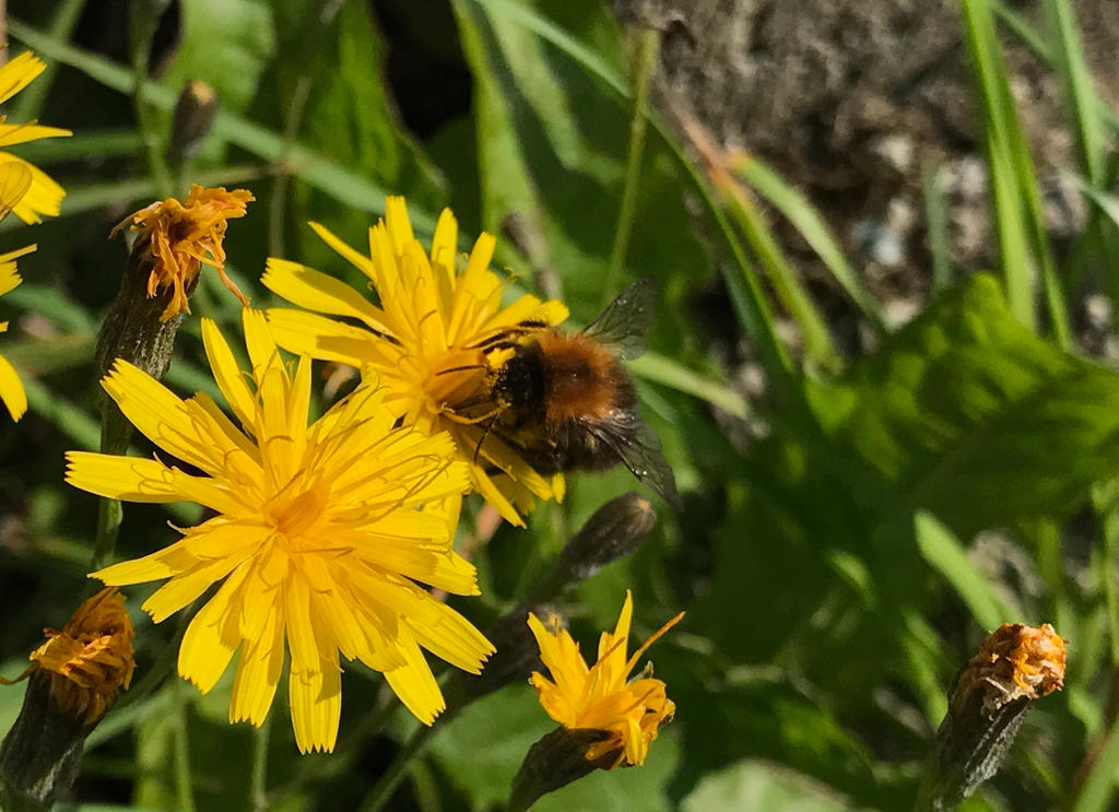 Bee in action by Phiphp