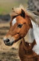A Pretty Pony by lynjupiter