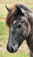 Another Pretty pony by lynjupiter