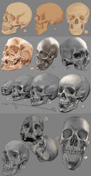 Drawing practise: The human skull