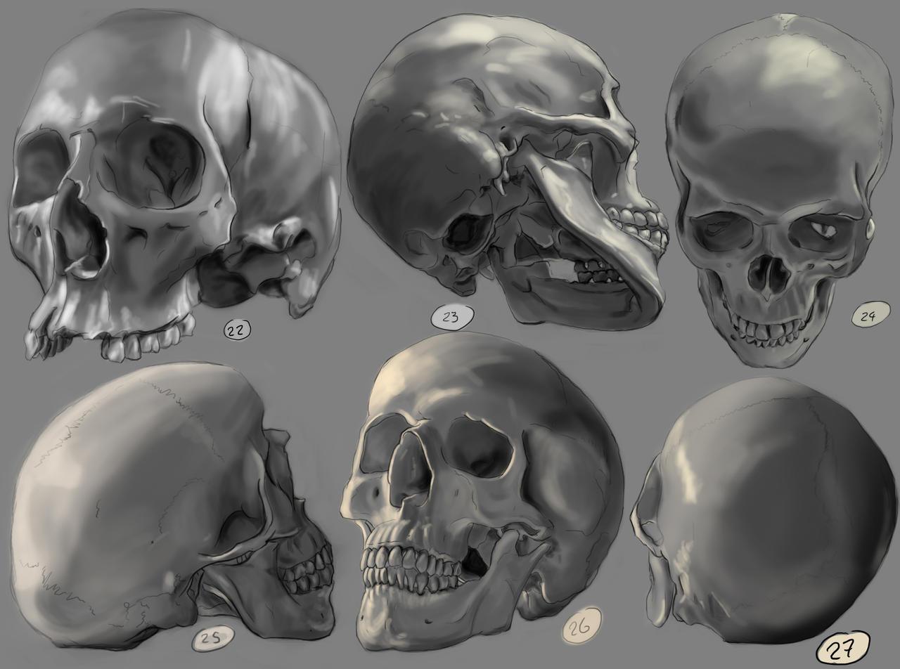 Drawing Practise Human Skulls 2 By Ignaziodelmar On