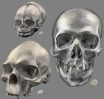 Drawing practise - Human Skulls 3