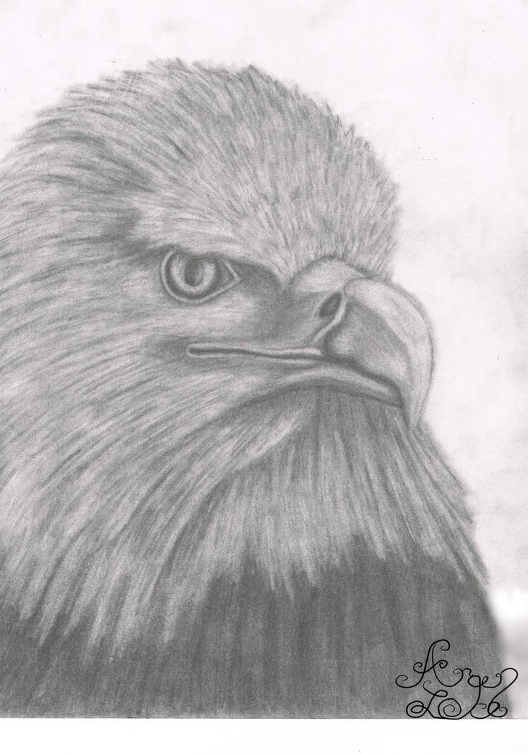 Fierce Eagle by Arqenloce