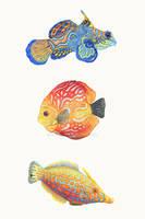 <b>Water Colors</b><br><i>ZHField</i>