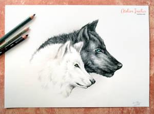 Wolfsballade