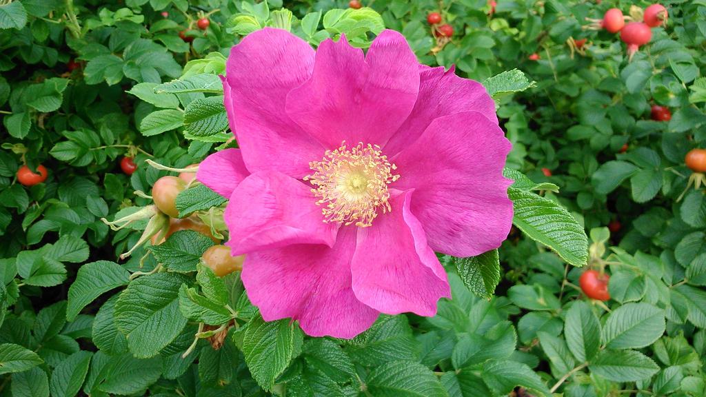 I Never Promised You A Rose Garden By Tommywolfie On Deviantart