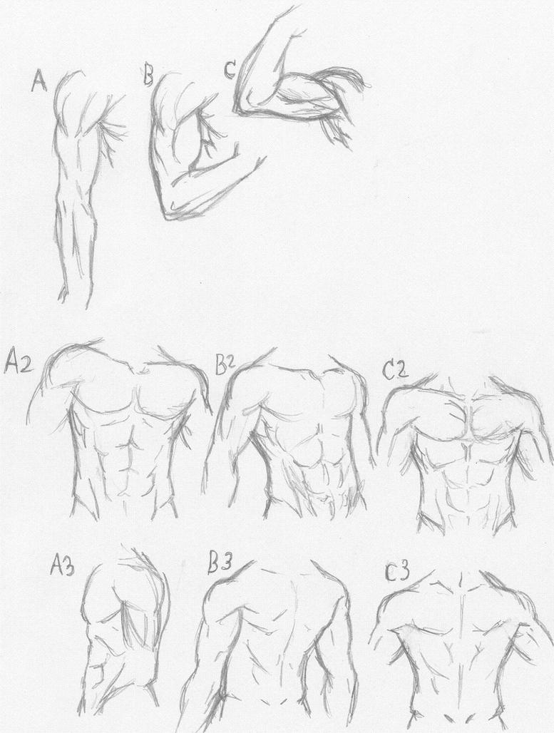 Muscle anatomy tutorial sorta XD by Ghost-of-Shoichi