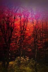 Fall on the Wilson River by MFDonovan