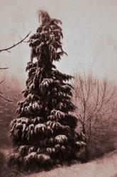 Snowy Scene by MFDonovan