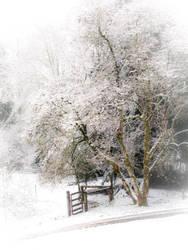 Winters Day by MFDonovan