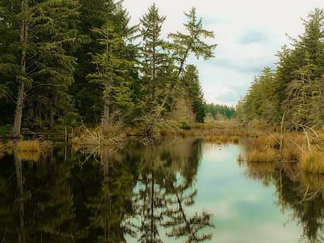 Swampy Lake