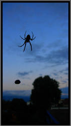 Shelob is dancing in the sky