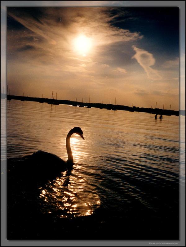 Swan by ArtandMore