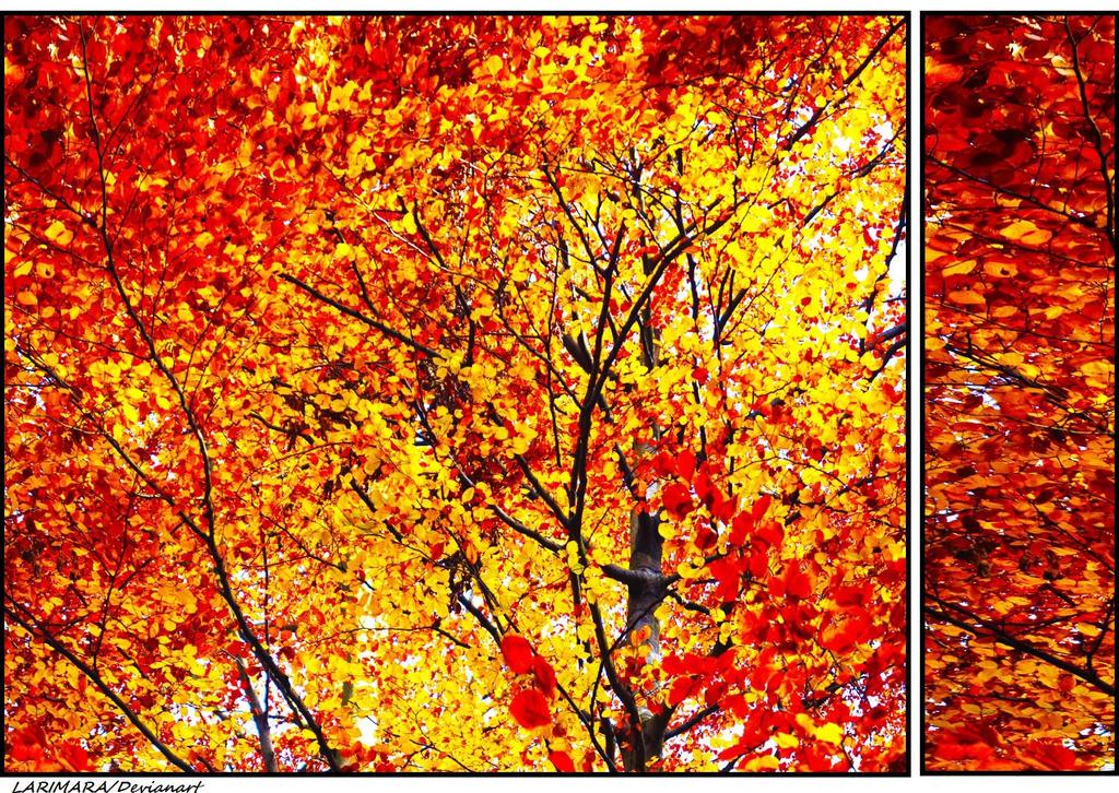golden leaves by Larimara