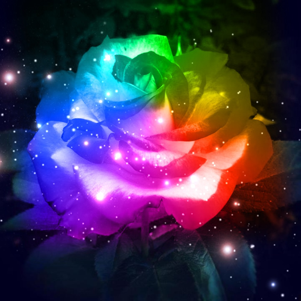 Rainbow galaxy rose by missjanellexo on deviantart for Pictures of rainbow roses